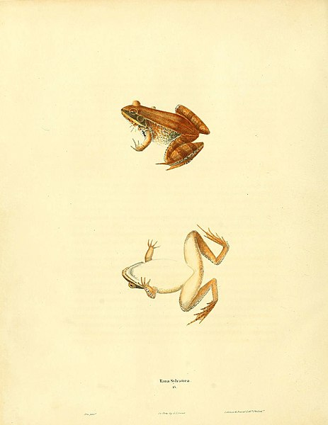 File:North American herpetology, or, A description of the reptiles inhabiting the United States (6046060339).jpg