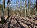 Oak-Forest in the Spandauer Forst.jpg