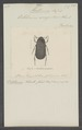 Octotemna - Print - Iconographia Zoologica - Special Collections University of Amsterdam - UBAINV0274 020 03 0036.tif