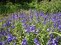 Odessa Main Botanical garden 033.jpg