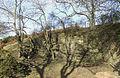 Old Quarry near Munslow, Shropshire - geograph.org.uk - 676185.jpg