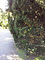 Orto botanico di Napoli 102.jpg