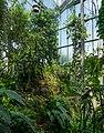 Osnabrück - Botanischer Garten - Tropenhaus - Innenansicht -BT- 05.jpg