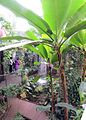 OtagoMuseum-tropicalforest.jpg