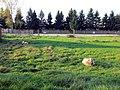 Ovce - panoramio (1).jpg
