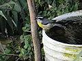 Pássaro 9 - panoramio.jpg
