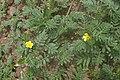 P5270475 1 Erywan dolina Hrazdan.jpg