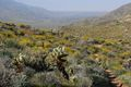 Palm Springs from Palm Canyon 1.jpg