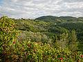 Panorama Montefioralle n02.jpg
