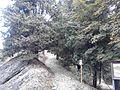 Parco di Fiorentino.jpg