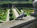 Park Květná zahrada (Kroměříž) - holub hřivnáč.JPG