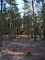 Park Wood - geograph.org.uk - 316707.jpg