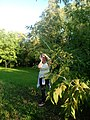 Park przy pałacu Wierusz-Kowalskich, Brwinów. Dokumentacja.jpg