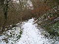 Path in the woods - geograph.org.uk - 1712674.jpg