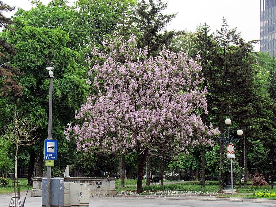 Pioneers Park, Belgrade