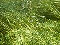 """Paysage subaquatique Subaquatic landscape rivière """"Les Baillons"""" à Enquin-sur-Baillons F Lamiot 04.jpg"""
