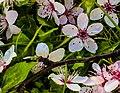 Peach Flowers (250914647).jpeg