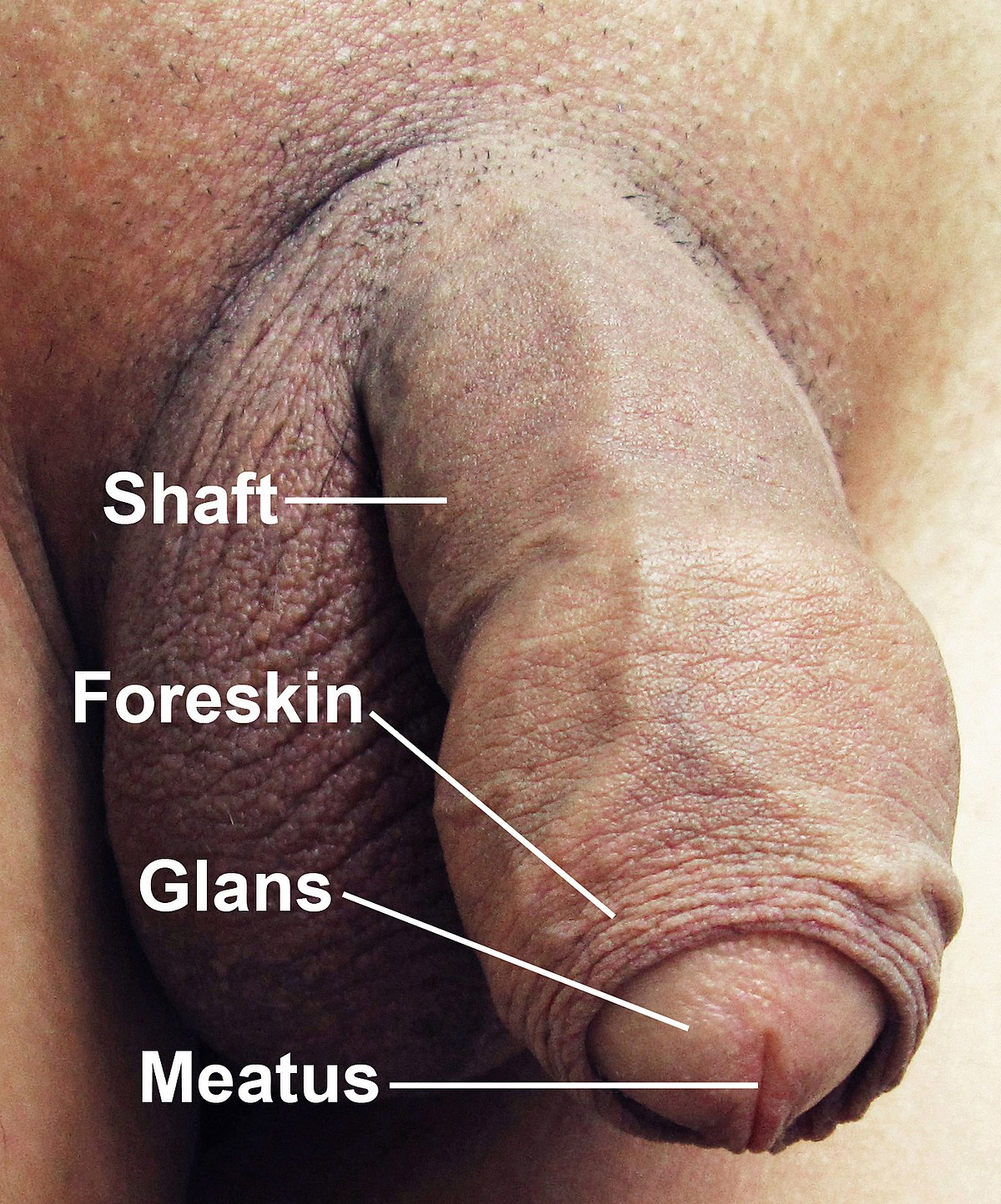 Sensitive areas penis