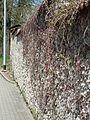 Perknovský zelený plot.JPG
