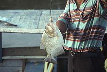 Piranha - Wikipedia