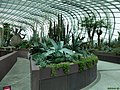 Plants - panoramio (6).jpg