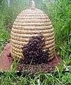 Pletara sa pčelama.jpg