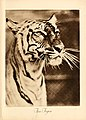 Portraits at the zoo (1915) (14753088512).jpg