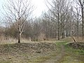 Poyle Poplars - geograph.org.uk - 137013.jpg