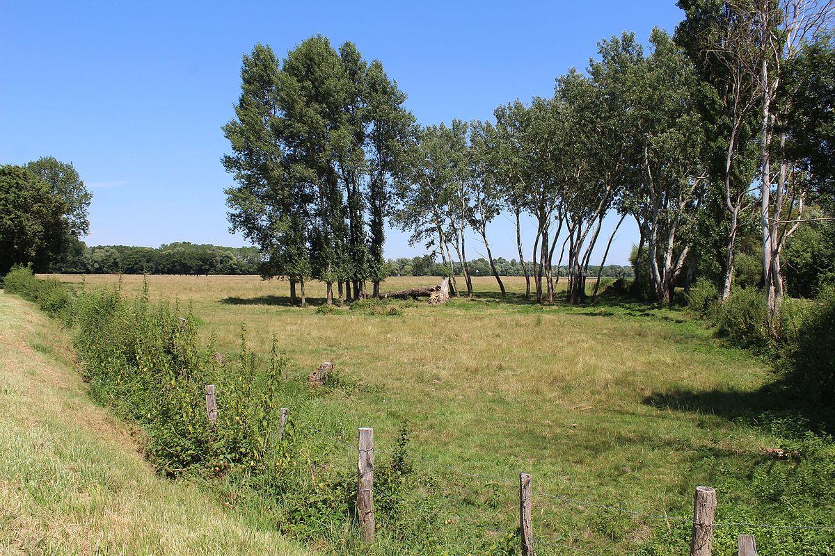 Prairies inondables du val de sa ne wikip dia for Jardin val de saone