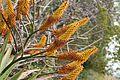 Pretoria Botanical Gardens-014.jpg
