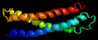 STX1A protein-coding gene in the species Homo sapiens