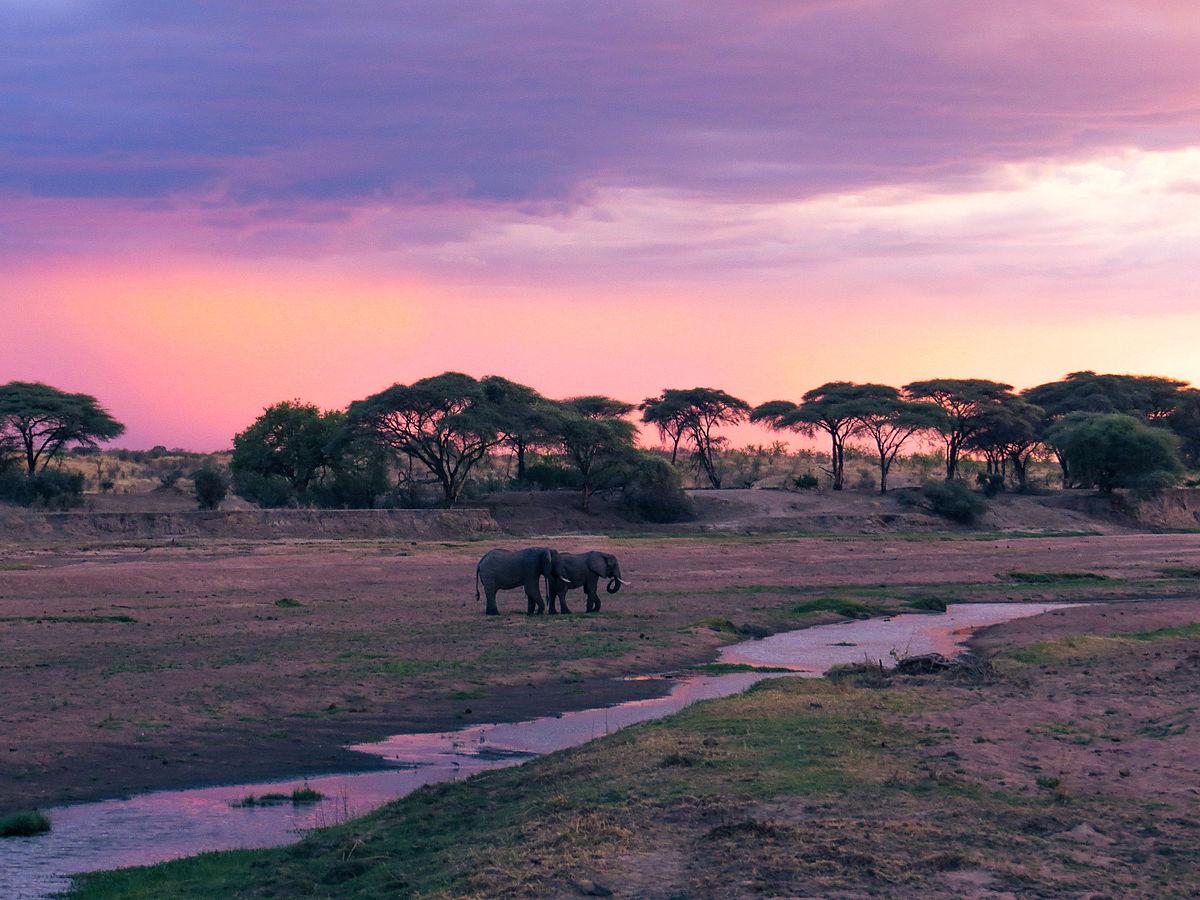 Ruaha National Park - Wikipedia