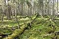 Pyhä-Häkki National Park.jpg