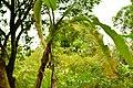 Quê hương - mùng 1 tết - panoramio (3).jpg