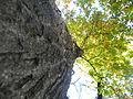 Quercus cerris (4).JPG