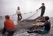 Men and women hauling a fishing net onto a beach on the Quileute Indian Reservation