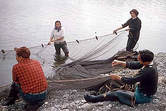 United States v. Washington - Men and women hauling a fishing net onto a beach on the Quileute Indian Reservation