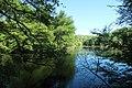 Réserve naturelle régionale des étangs de Bonnelles le 26 mai 2017 - 47.jpg