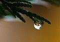 Rain drops close-up (8447711210).jpg