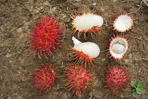 Rambutan fruits (Nephelium lappaceum)