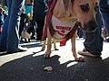Redneck dog (2956769149).jpg