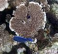 Reef 11 (4385928854).jpg