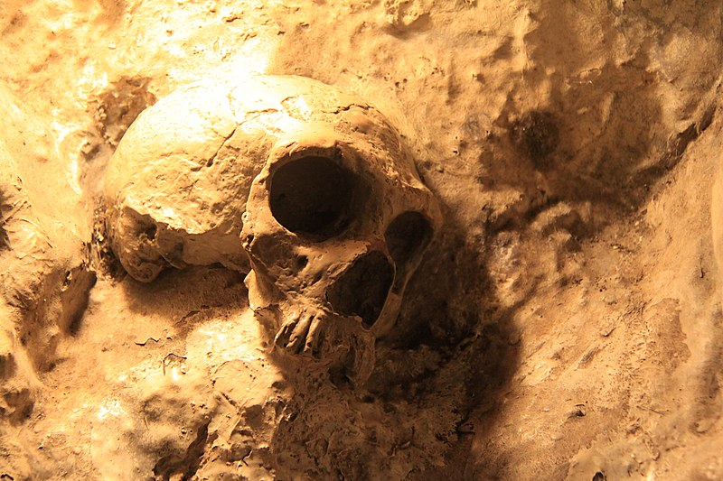 File:Replica of Neanderthal Skull in St. Michaels Cave, Gibraltar.jpg
