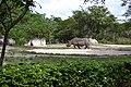 Rhinoceros in zoo.jpg