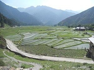 Leepa Valley - Paddy field in Leepa valley