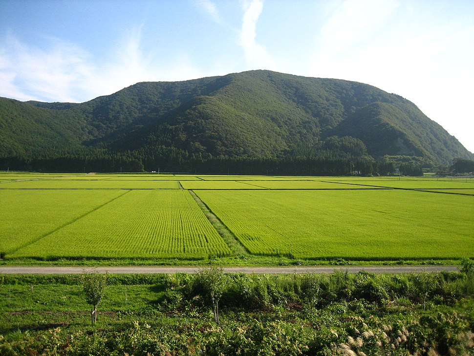 Rice Paddies In Aizu, Japan