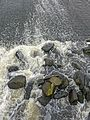 River Aire (27250221710).jpg