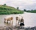 River Brosna 1993.jpg