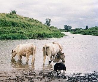 River Brosna - River Brosna