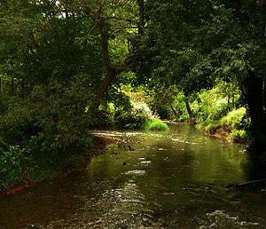Freshford, Somerset - River Frome at Freshford Mill